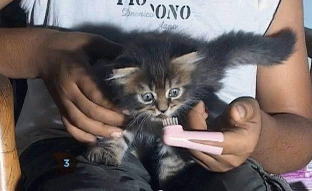 Чистка зубов кошке и коту