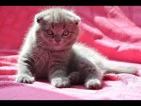 Пошаговая инструкция приучения котёнка к лотку