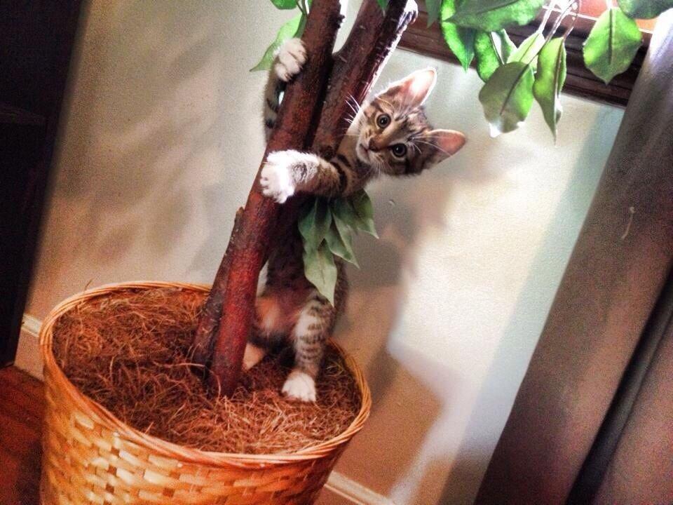Как отучить кошку копать цветы?