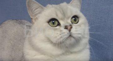 Почему у кошки текут глаза: причины, лечение и профилактика слезотечения