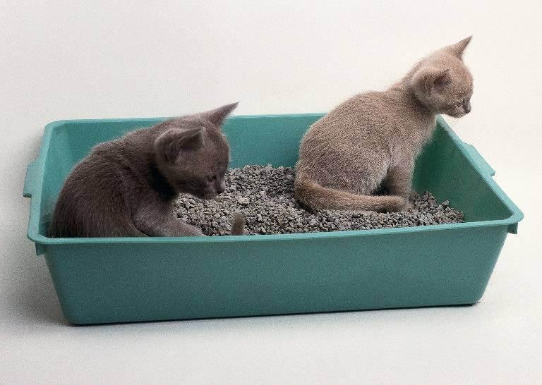 Наполнители для кошачьего туалета, смываемые в унитаз