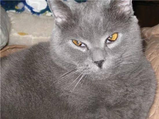 Пленка на глазу у кошки - симптомы, лечение, препараты, причины появления   наши лучшие друзья