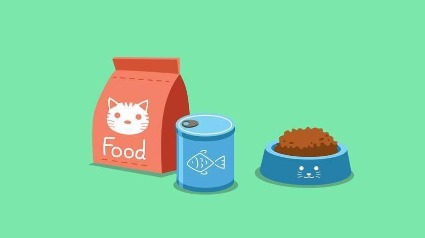 Чем кормить старую кошку: советы и рекомендации о правильном и сбалансированном питании
