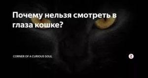 Почему нельзя смотреть в глаза кошке: разбираемся в кошачьей психологии
