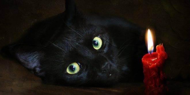 Приметы про кошек — черных, рыжих и белых