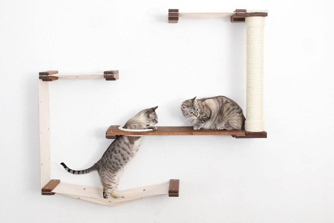 Как выбрать когтеточку для кошек и почему без нее не обойтись