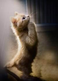 Можно ли кошкам сладкое