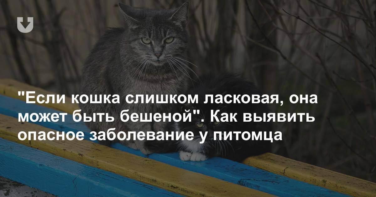 Царапины и укусы кошки: опасные последствия