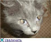 У кошки на глазу белая пленка: причины, что делать, лечение