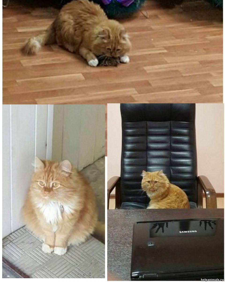 Почему коты не приживаются в доме: приметы