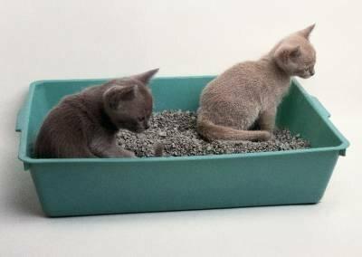 Что делать, если котенок ест наполнитель для туалета