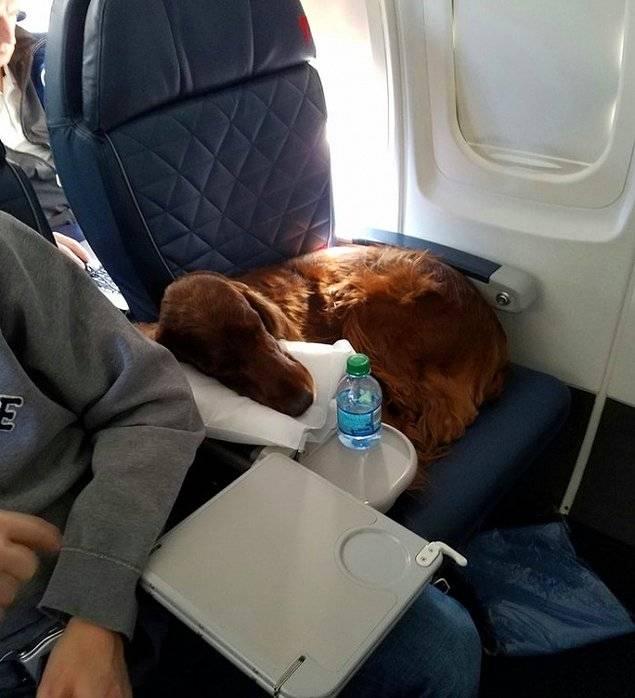 Как перевезти кошку в самолете,требования авиакомпаний и условия транспортировки кошек