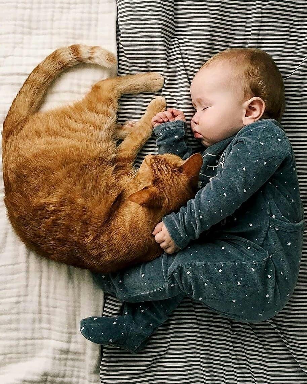 Кот задушил ребенка. как уберечь младенца от домашнего животного