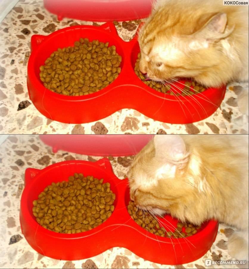 Почему котенок не ест сухой корм: причины избирательности