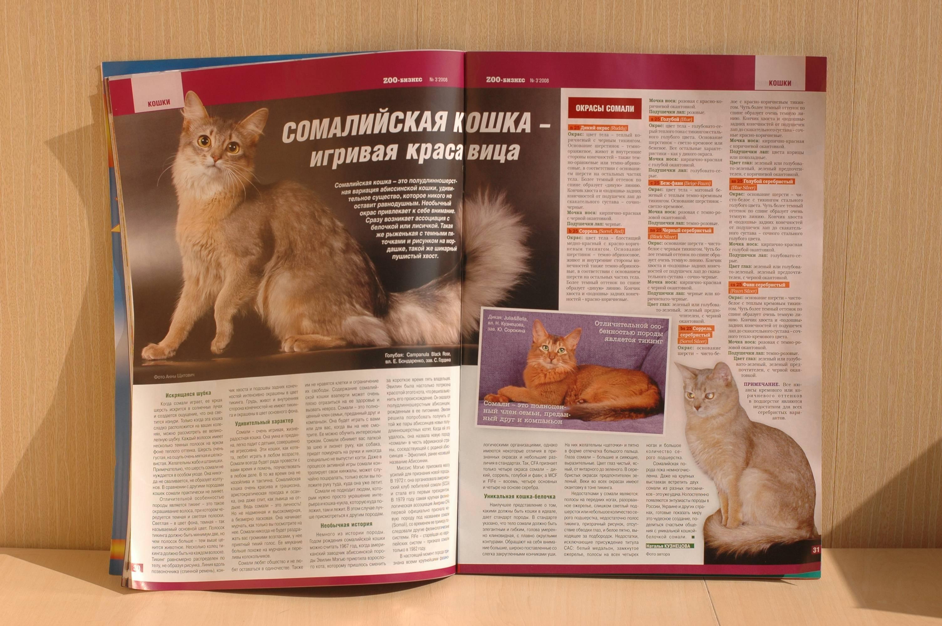 Какие кошки почти не линяют, список с фотографиями и описанием, видео