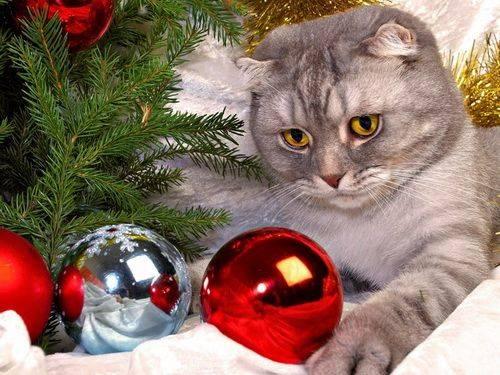 «осторожно, новогодние праздники!» - лента новостей уфы