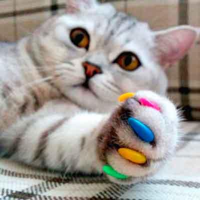 Мягкие коготки, антицарапки для кошек | ветклиника vetstate, москва