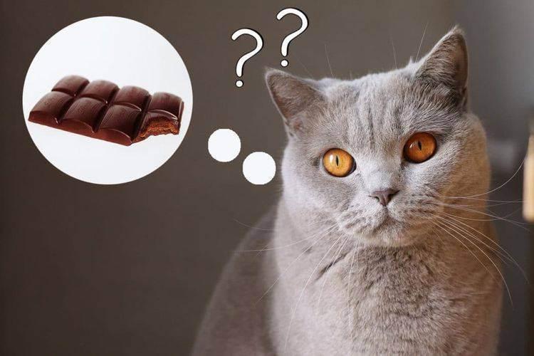 Можно ли давать кошкам сладкое