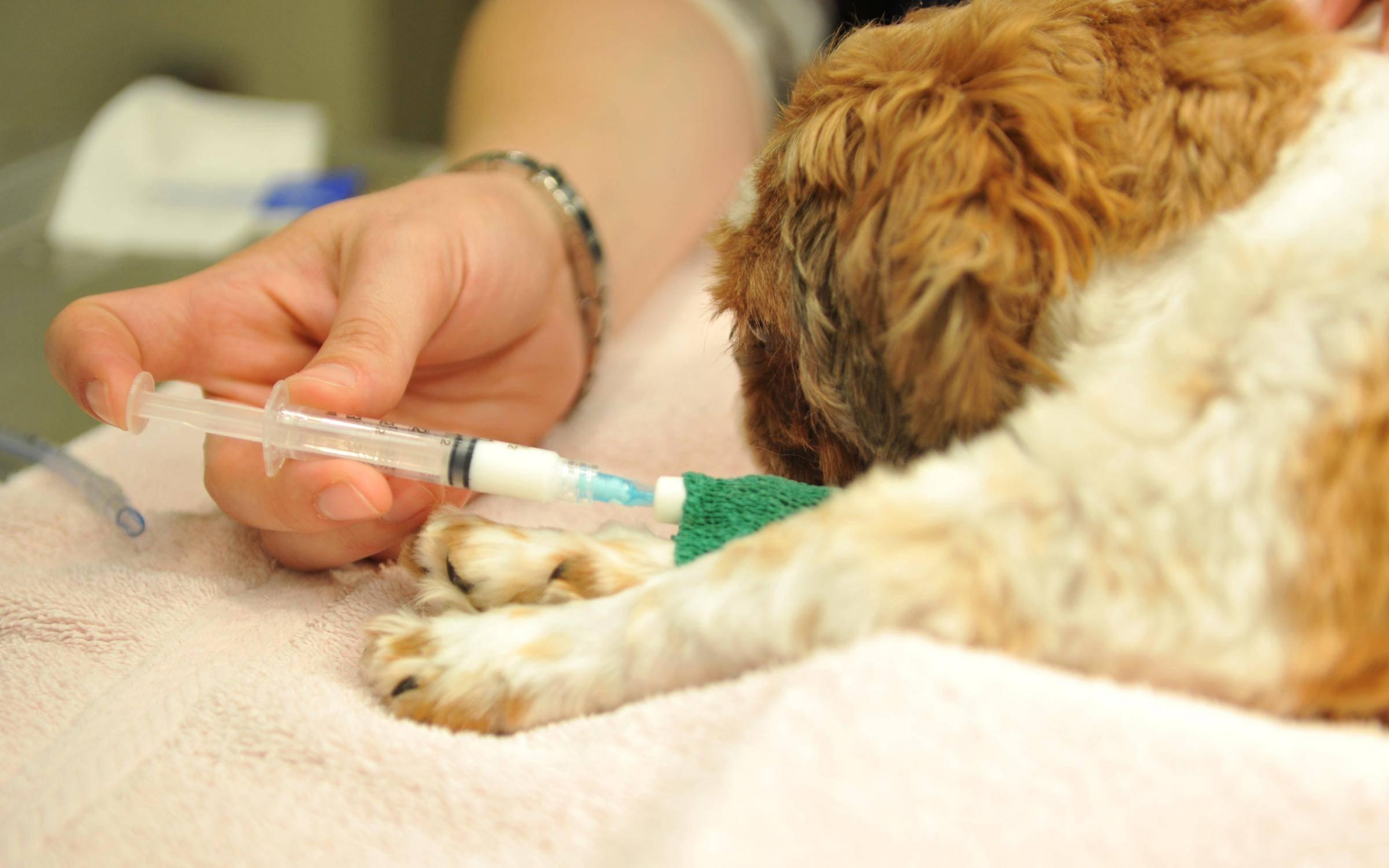 Как проводится усыпление домашних животных