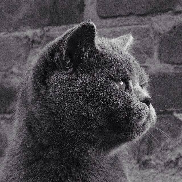 Почему котята часто чихают: причины, лечение