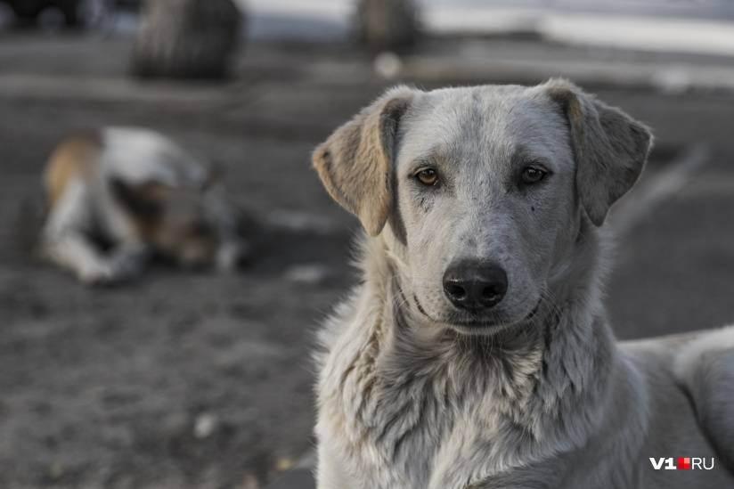 Как гуманно усыпить собаку