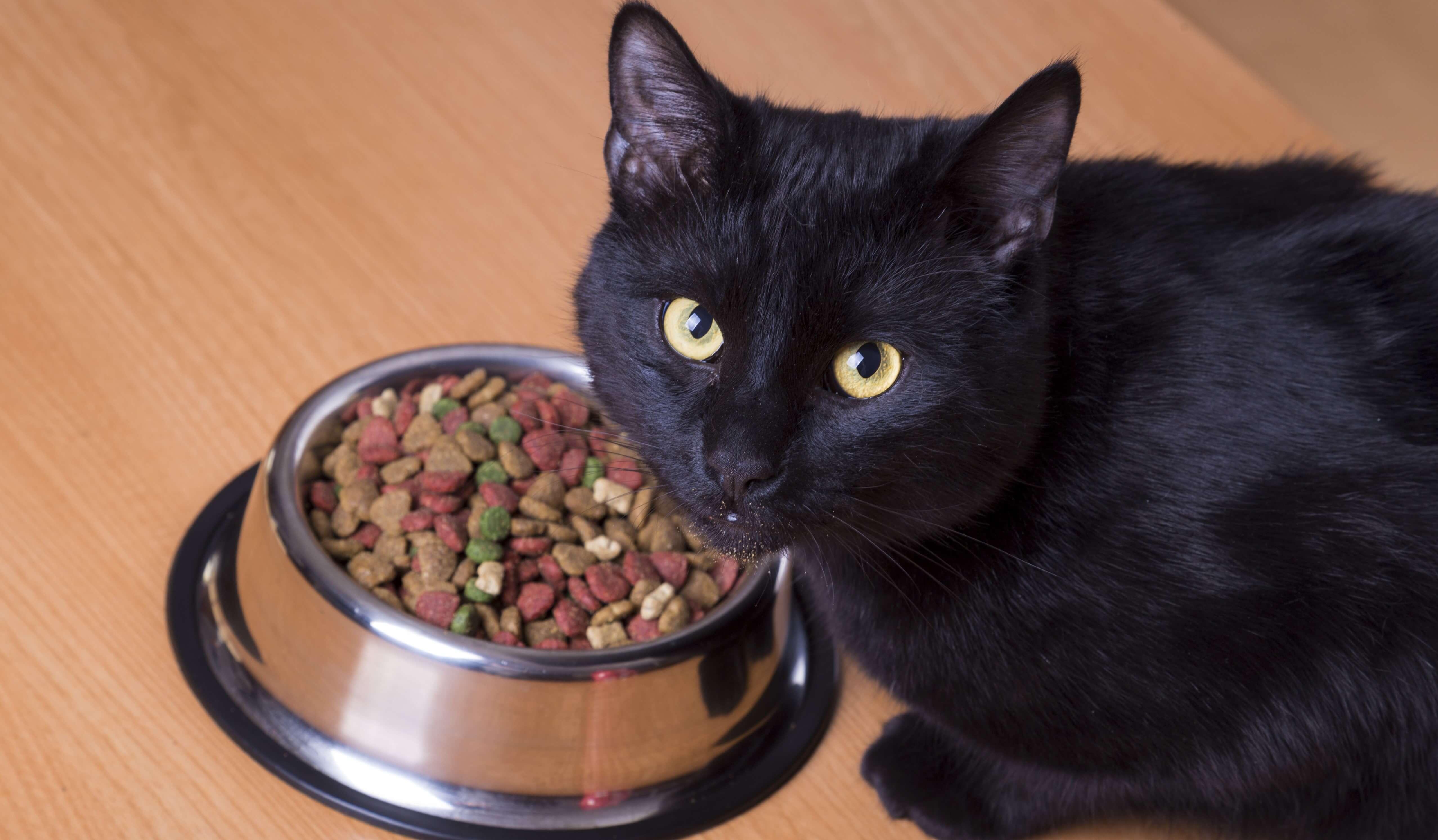 Как приучить взрослую кошку к сухому корму: быстро и просто