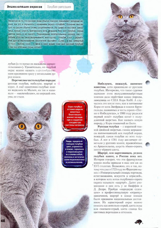 Породные стандарты русской голубой кошки