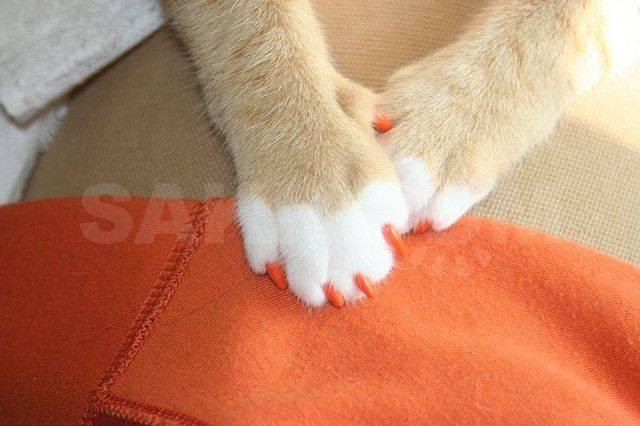 Как делают операцию «мягкие лапки» у кошек: особенности процедуры, риски и последствия, альтернативные методы