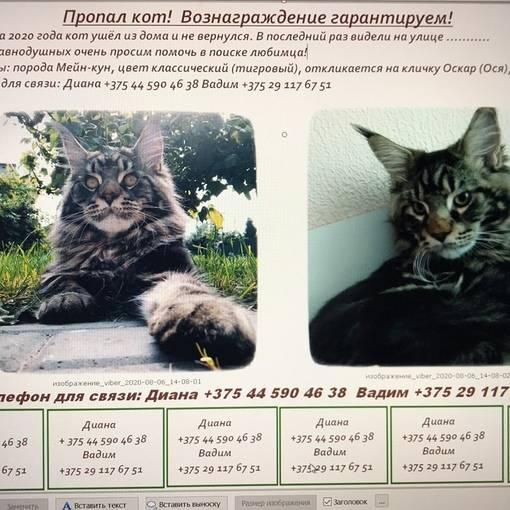 График прививок для котят мейн-кун