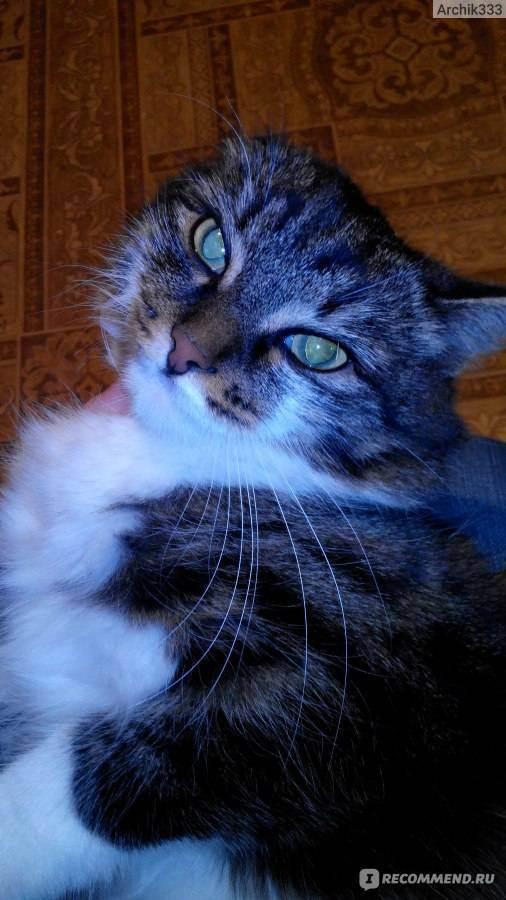 Применение супрелорина у домашних животных как альтернатива хирургической кастрации