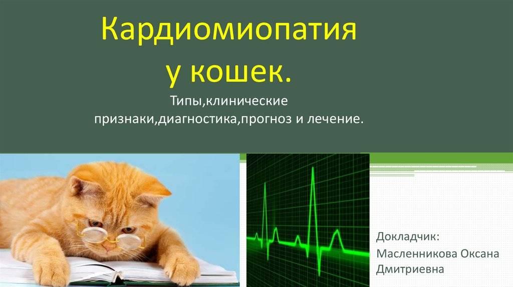 Гкмп у кошек: виды, причины, признаки, диагностика и терапия