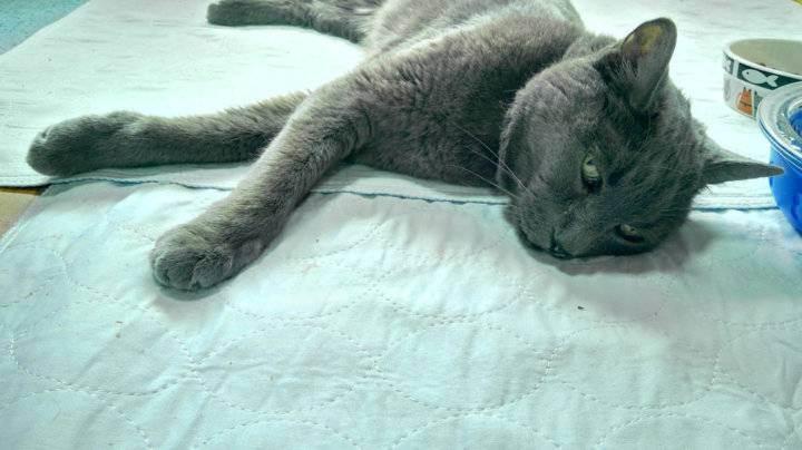 Что делать если кошка отравилась