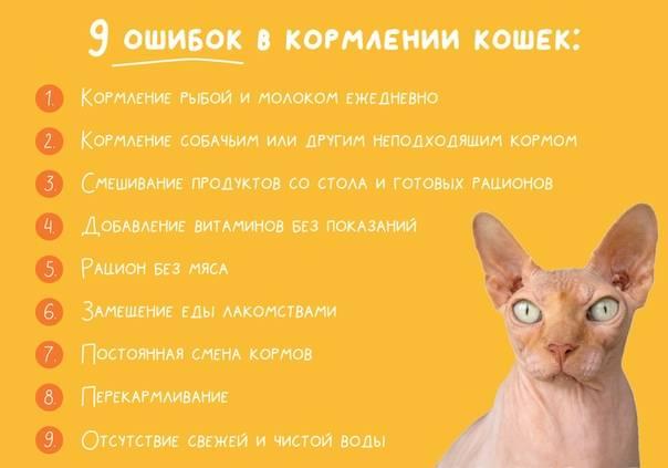 Как и чем кормить котят до 1 месяца: смеси, заменители молока, режим и способы кормления