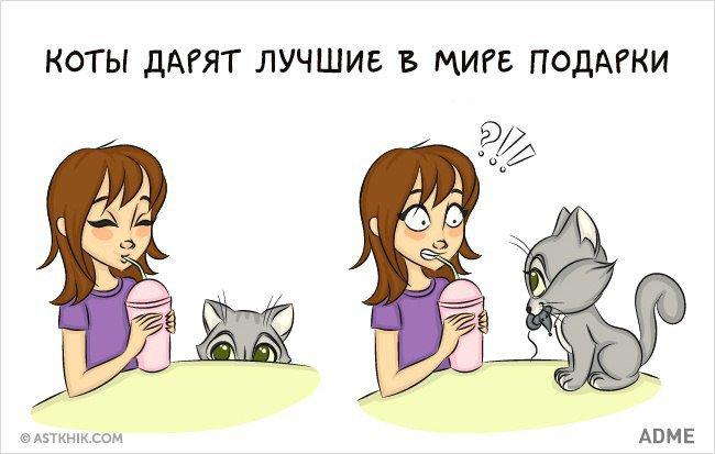 Что лучше кот или кошка в квартире?   в чем разница