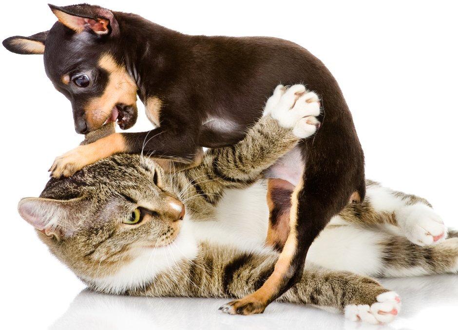 Почему кошка шипит на родного котенка и бьет его лапами, как подружить взрослое животное и нового питомца?