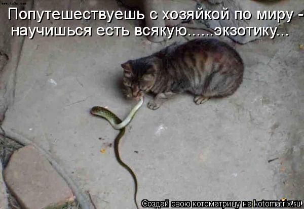 Почему коты не едят крыс - наши домашние друзья