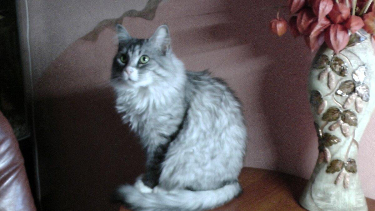 Какая память у котов – как и надолго ли запоминают информацию домашние любимцы?