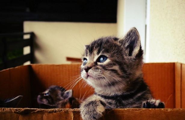 Как приучить кошку к когтеточке. интересные советы