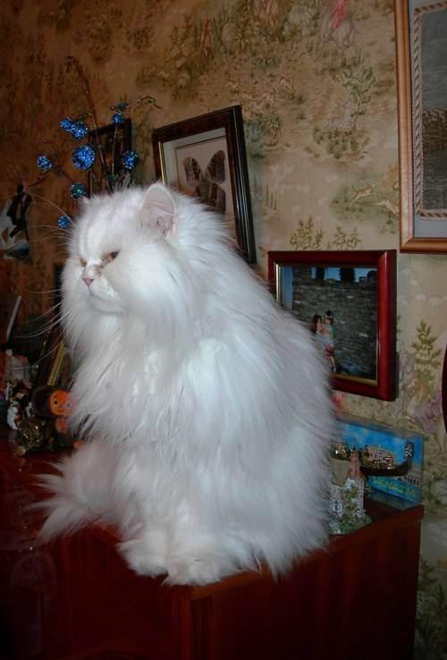Можно ли мыть котят дегтярным мылом. помогает ли дегтярное мыло от блох у домашних животных. помогает ли дегтярное мыло от блох