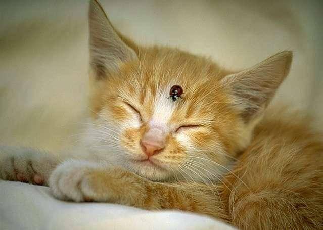 Как убрать с ковра запах кошачьей мочи