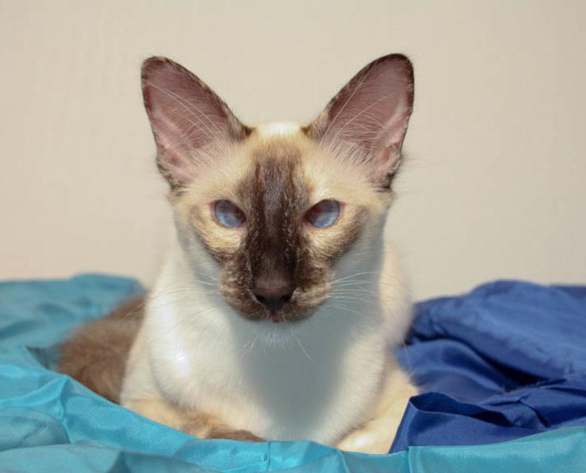 Кот с косыми глазами — рассказываем все нюансы