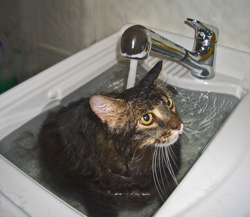 Как искупать кота, если он боится воды – pet-mir.ru