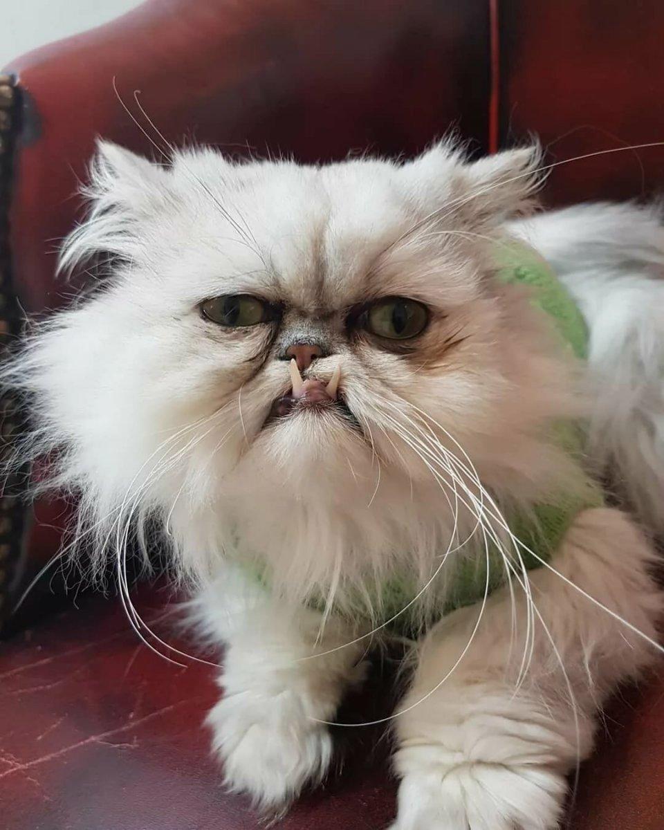 10 самых опасных кошек в мире