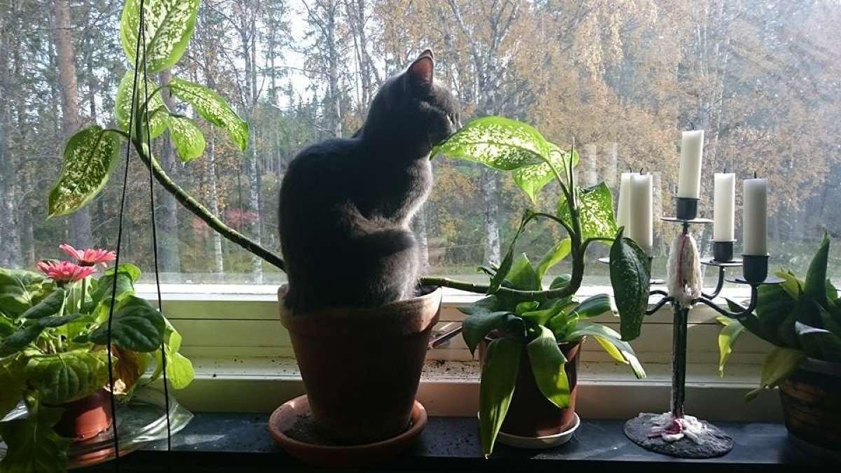 Кошка ест землю из цветочного горшка, что делать?
