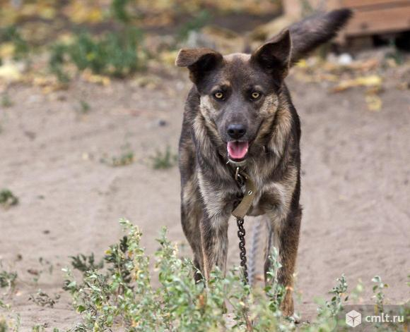Беспородные щенки и собаки для дома и семьи