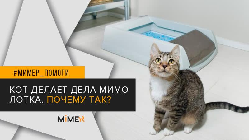 Почему кот ходит в туалет по-маленькому мимо лотка