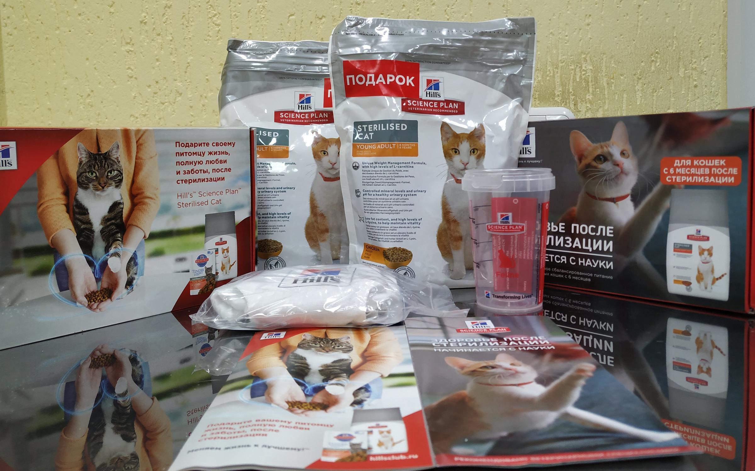 Что делать, если кошка просит кота после стерилизации, орет, метит, а так же пытается уйти в загул?