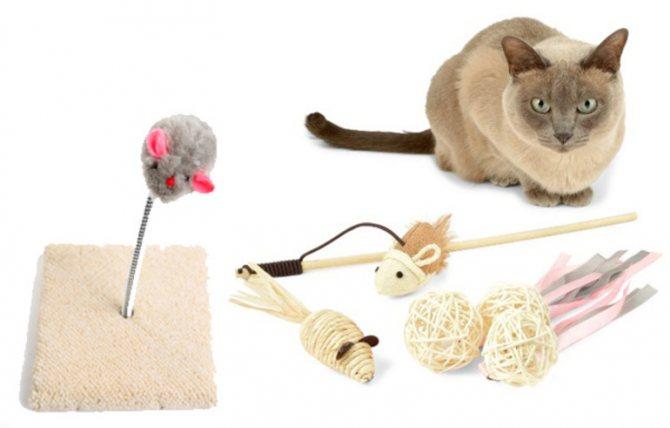 Делаем игрушки для котёнка своими руками