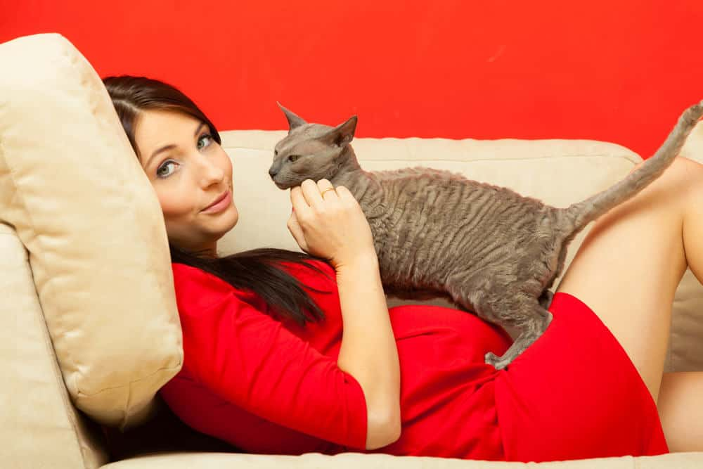 Чем опасны кошки для беременных