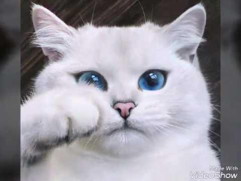 Очарование и грация самых красивых пород кошек: топ-10
